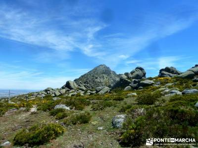 Pico del Zapatero, Sierra de la Paramera; informacion sobre el tejo; tarjeta federativa de montaña